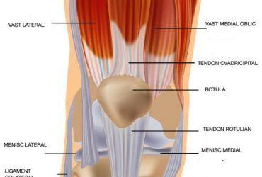 7. Leziunea tendonului cvadricipital