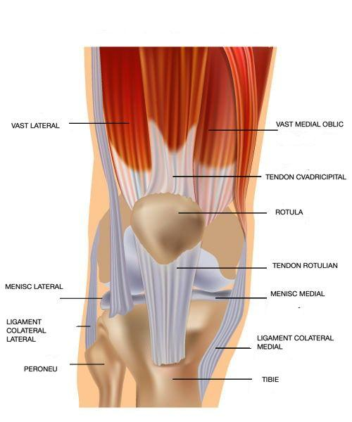 leziunea tendonului cvadricipital genunchi ortopedie